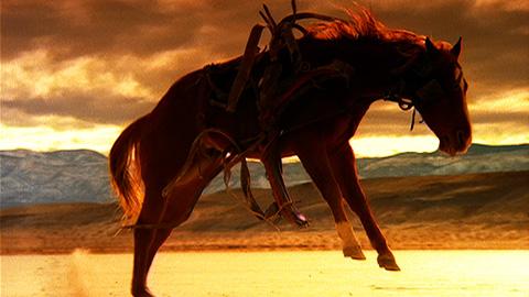 Aegon Horses